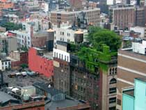 Green roofs on a building in Manhattan